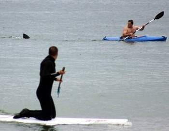 акула гонится за серфером