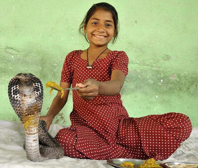 девочка кормит королевскую змею