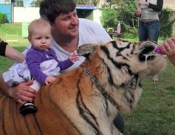 ролик с семьей где живет тигр