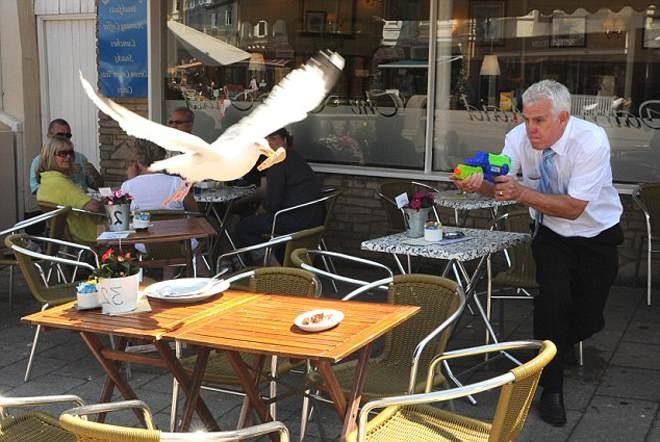 отпугивание чаек в кафе