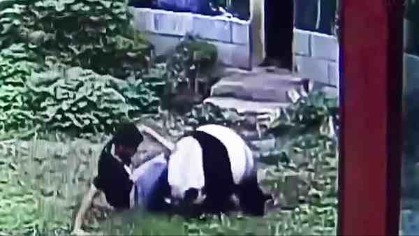 парень борется с пандой