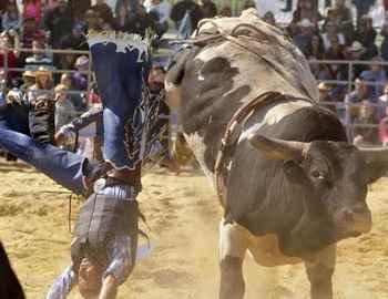 кобвой удается о рога быка