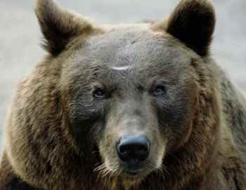 медведица напала на двух женщин