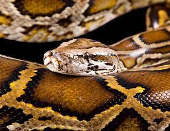 заблуждения о змеях