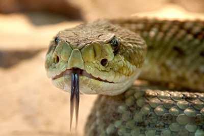 готовая змея