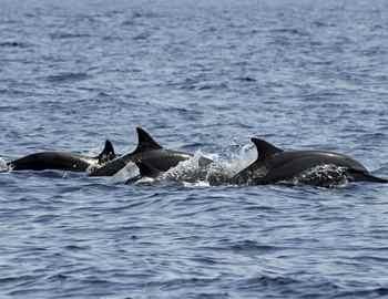 группа дельфинов