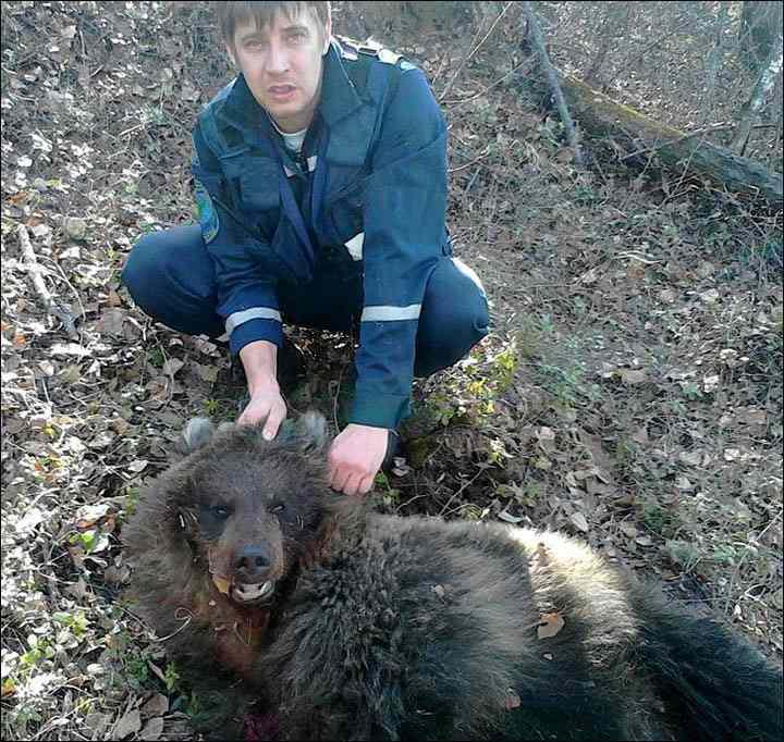 медведь убитый в лесу