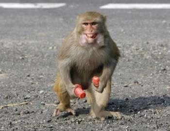 обезьяна напала на парня