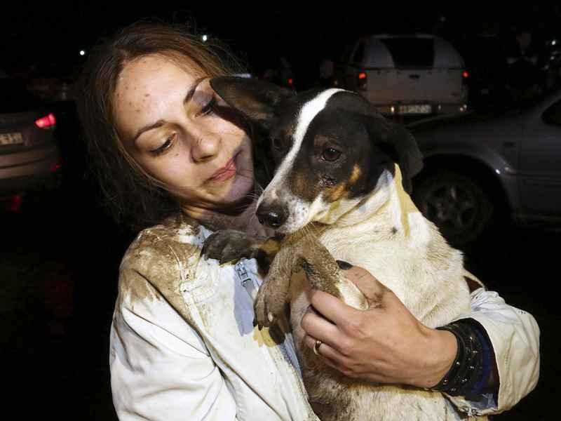 собака спасена от наводнения