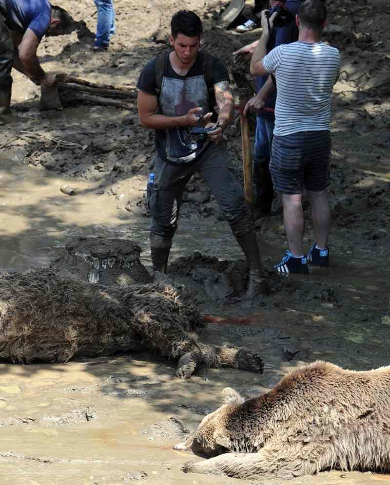 убитые животные