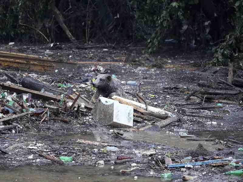 медвежонок спасшийся от наводнения