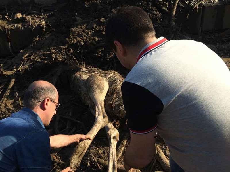В Тбилиси нашли метрвого страуса