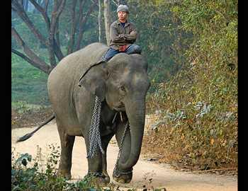 слона убил мужчину в Таиланде
