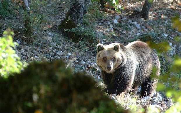 медведь в Италии