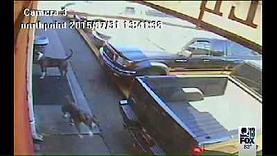 нападавшие собаки
