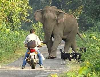 слон и водитель мотоцикла
