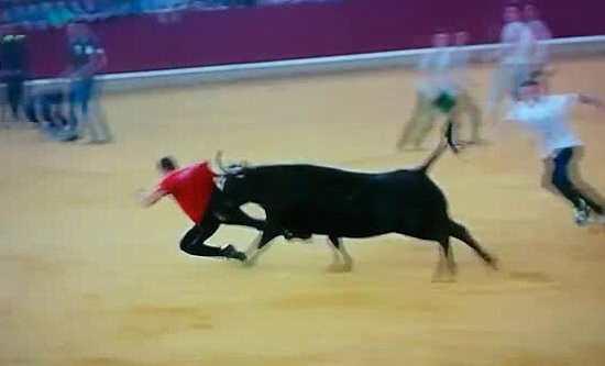 бык догнал своего болельщика