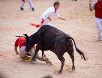 бык срывает одежду с мужчины