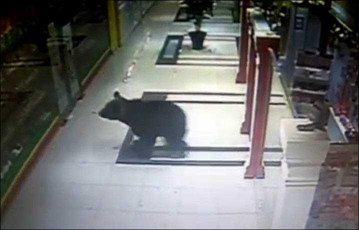 медведь бегает по центру