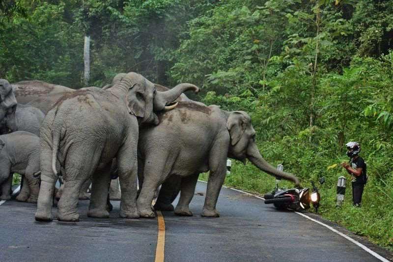 слоны нападают на мотоциклиста
