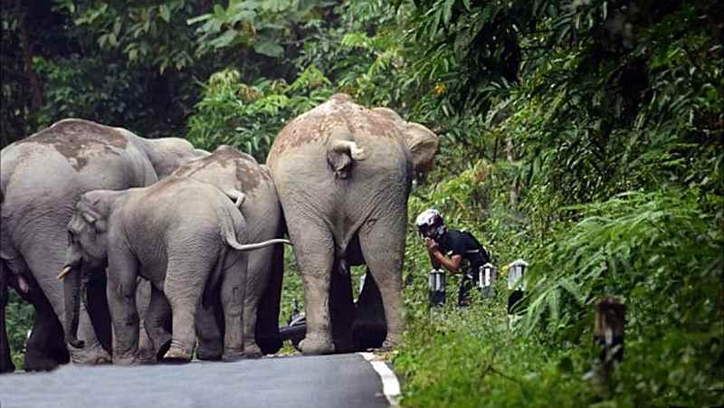 слоны обступили парня