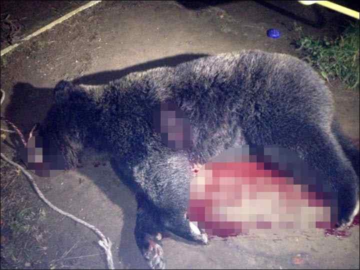 убит медведь в Хабаровске