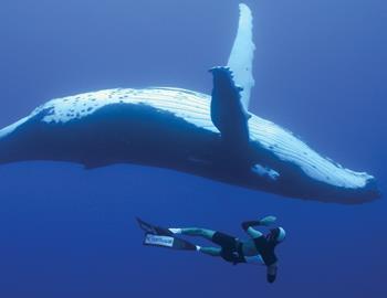 дайвер и кит