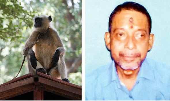 обезьяна-убийца