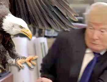 орел напал на Трампа