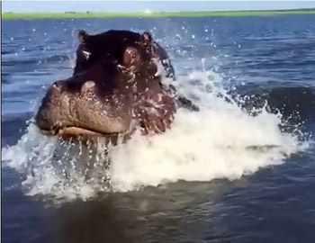 видео с нападениями в воде
