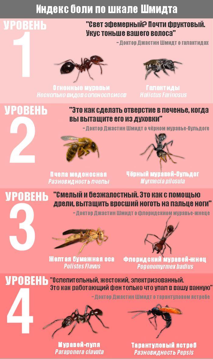 рейтинг укусов среди жалящих насекомых