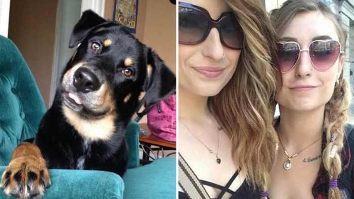 сетры-близнецы и собака
