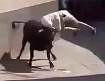 бык подбрасывает мужчину