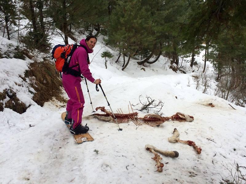 остатки животного на снегу