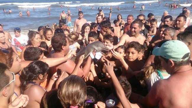 селфи с дельфином