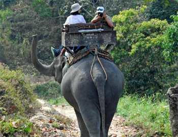 туристы на слоне