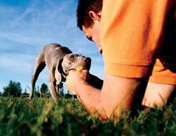передача паразитов от животных людям