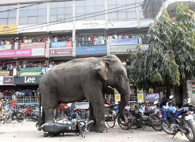 слон топчет машины и мотоциклы в Индии