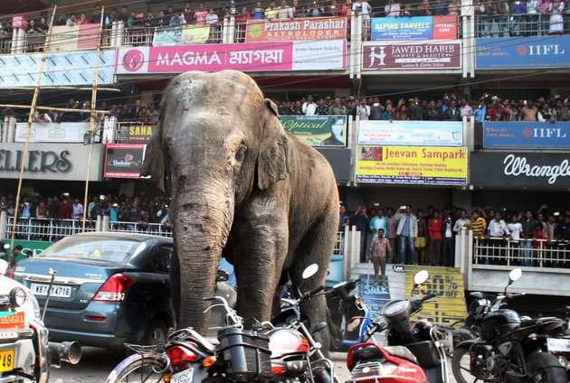 Индийский слона на дорогах