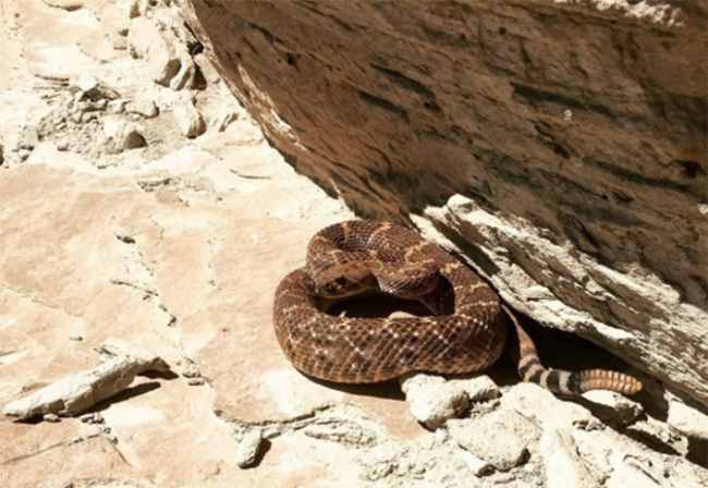 змея под камнем
