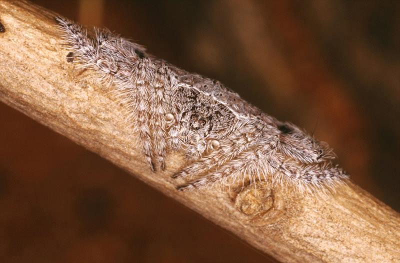 невидимый паук