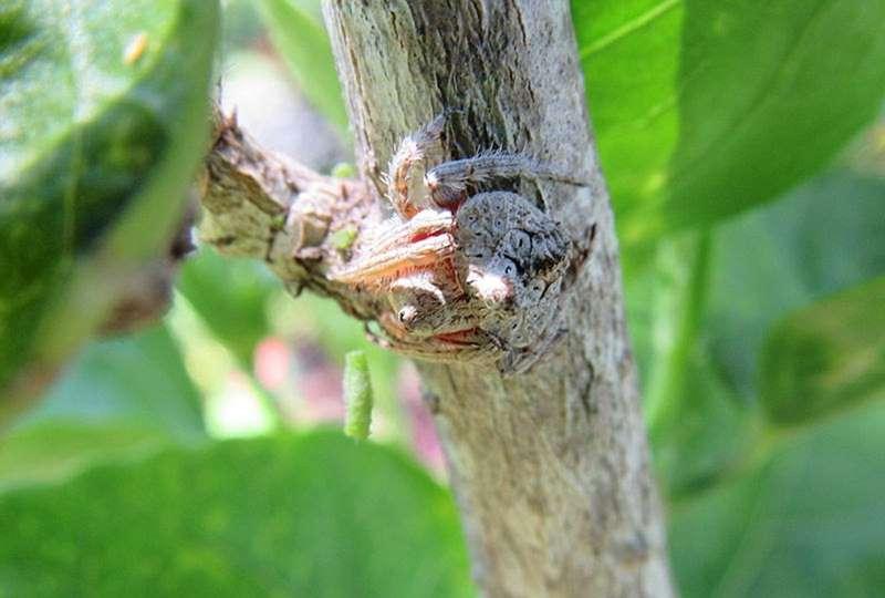 паук на стволе дерева