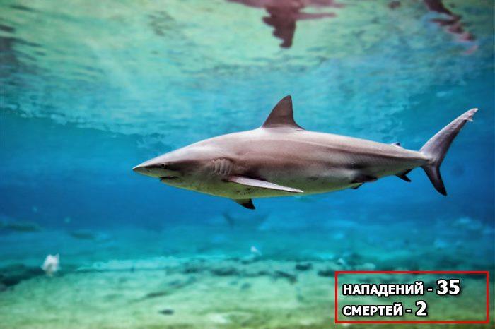 медная акула