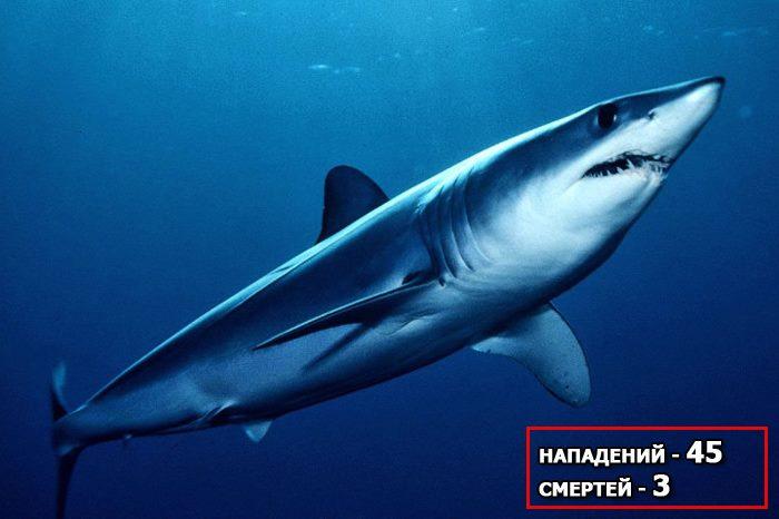 чернокрылая акула