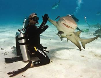 акулы и аквалангисты