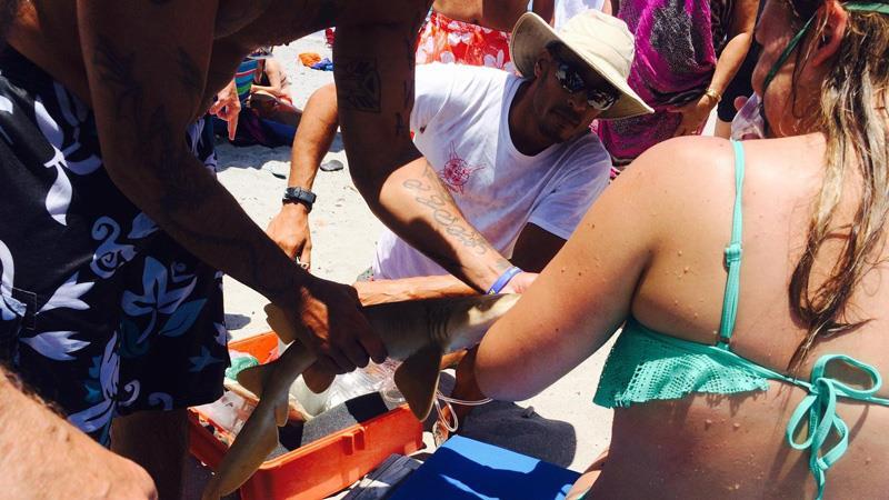 акула крепко вцепилась в руку женщины