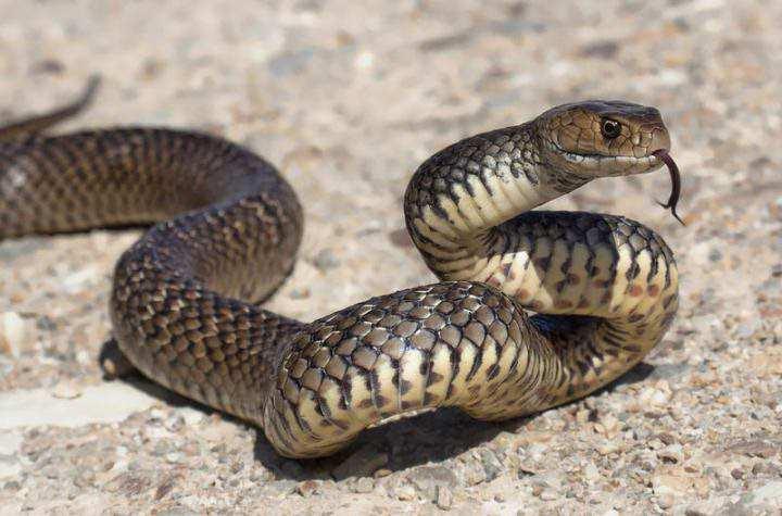 змея на скалах