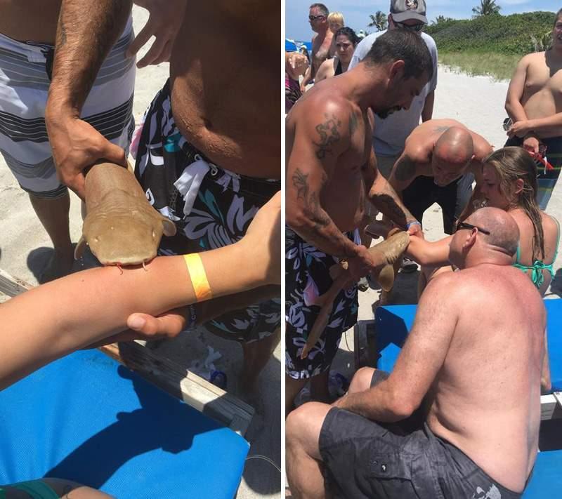 акула вцепилась в руку женщины