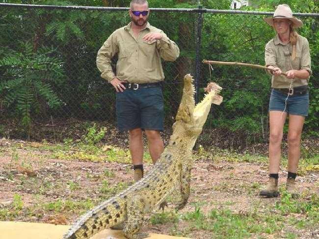 дрессировка крокодила