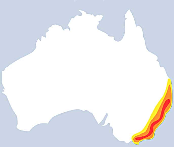 воронковый паук в Австралии